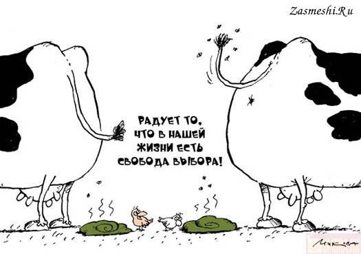 Картинки по запросу карикатура свобода выбор