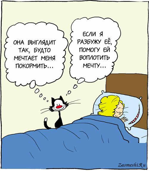 Картинки карикатура кота