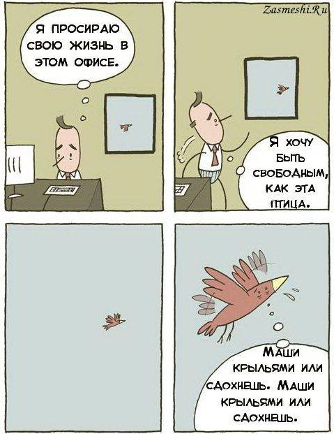 100-Svoboda.jpg
