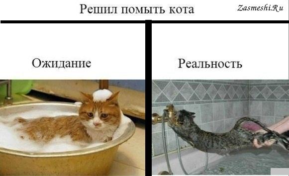 Как помыть кота реклама яндекса реклама для сайта ucoz