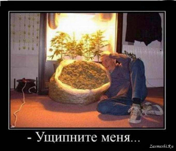 Демотиваторы конопли за употребление марихуаны в рб