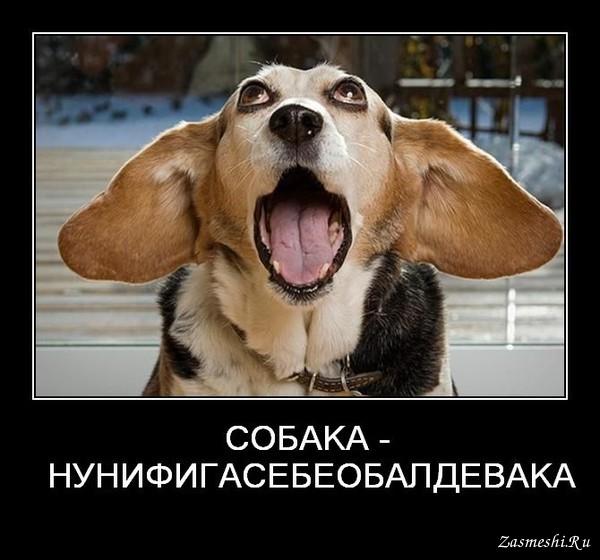хочу собаку демотиватор свою