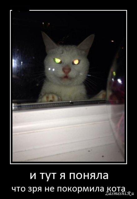 Демотиваторы злые коты