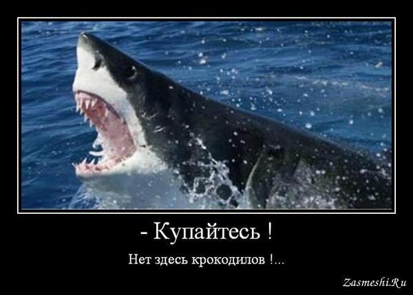 ней акулы боятся демотиваторы девочки месяцами