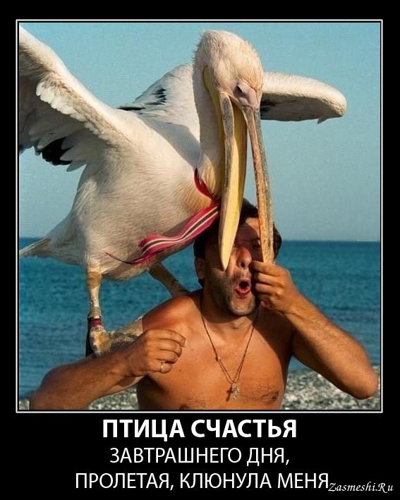 демотиваторы птица счастья