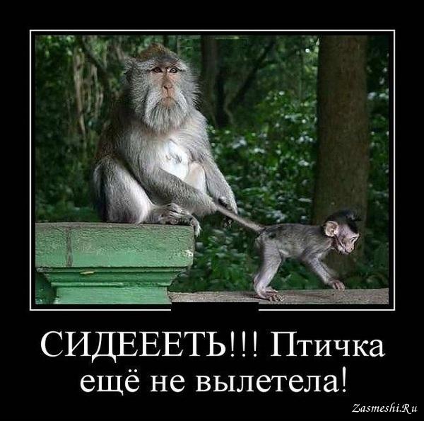 Демотиваторы русских обезьян