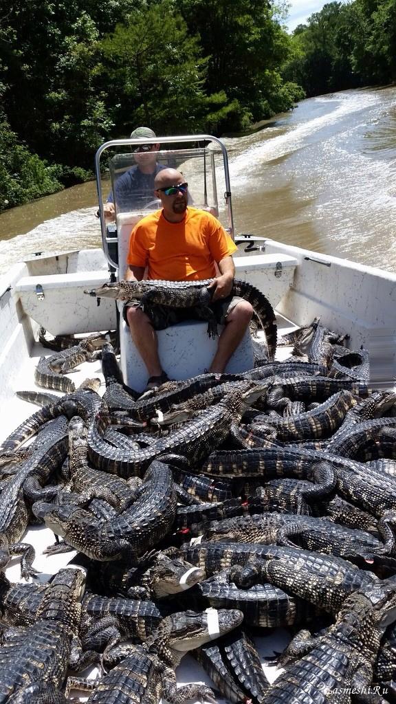 Прикольные картинки крокодила каяка, доброе