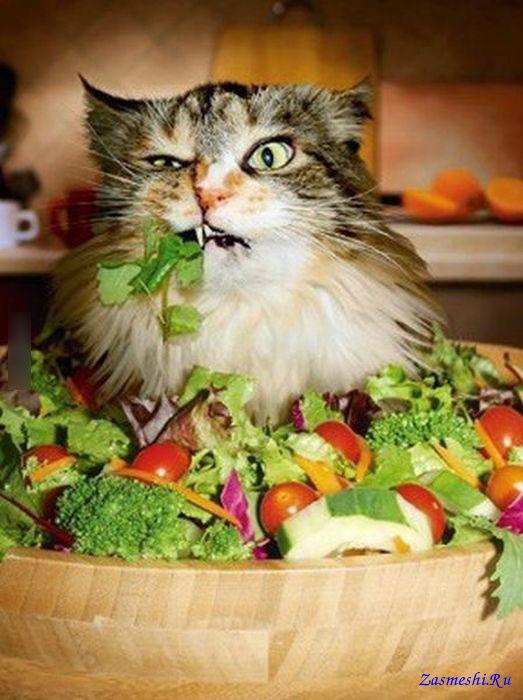хочу предложить толстые вегетарианцы фото заболевание