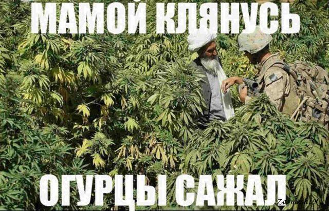 Вчені запропонували лікувати залежність від кокаїну марихуаною