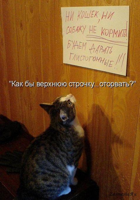картинка не верь коту его кормили какая-то идея воссоздания