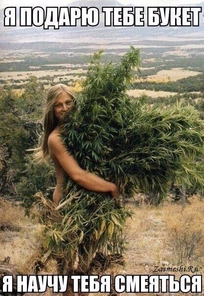 Фото марихуана приколы вена марихуана
