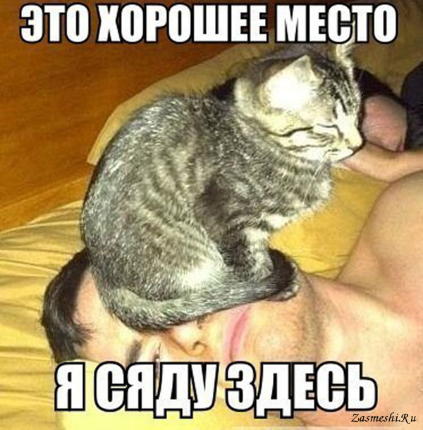 Бешенство у кошек симптомы формы первые признаки Что