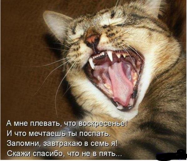 Фотоматрица - Голодный котэ