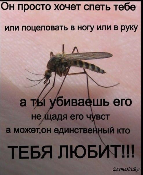 Смешные комары картинки, картинки дню повара