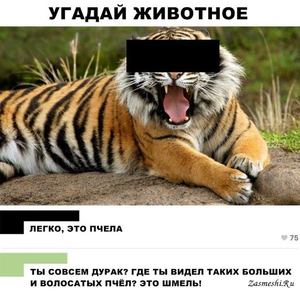 Угадай фото животного первом
