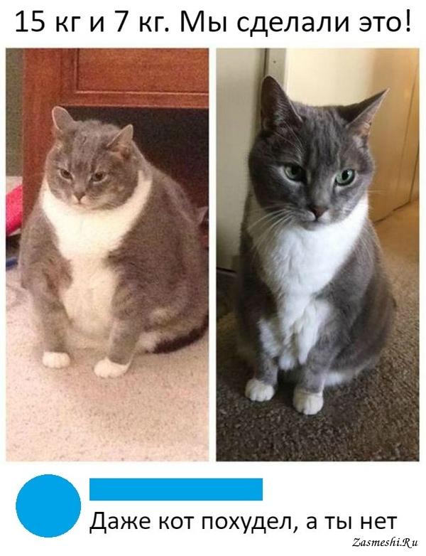 Резкое похудение кота причины