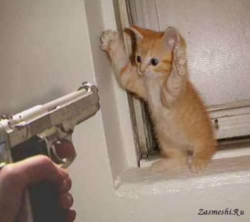 Фотография - Когда твой кот сожрал последнюю сосиску
